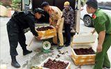Bắt giữ gần 50kg tôm hùm đất nhập lậu tại Lạng Sơn