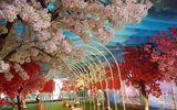 """Tư vấn - """"Thiên đường Sắc hoa Anh Đào"""" tại Công viên Thủ Lệ Hà Nội"""