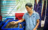Chàng kỹ sư trẻ liều lĩnh về quê nuôi ruồi, thu nhập 80 triệu đồng/tháng