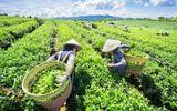 Khởi sắc xây dựng nông thôn mới trên vùng đất Phú Lương
