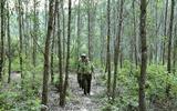 """Đang tìm kiếm cán bộ kiểm lâm bị """"mất tích"""" nhiều ngày trong rừng"""
