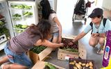 """Những """"dũng sĩ"""" giải cứu đồ ăn thừa ở Singapore"""