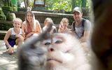 Cộng đồng mạng - Khỉ cũng biết selfie và giơ ngón tay giữa gây bão mạng