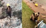Video: Mải mê lùng sục thức ăn, gấu bị mắc kẹt đầu vào xô nhựa