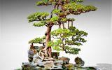 Xã hội - Hội nhập cây cảnh nghệ thuật, bonsai Quốc tế: Cách tiếp cận nào phù hợp với Việt Nam