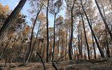 Vì sao chưa huy động trực thăng chữa cháy rừng nghiêm trọng ở Hà Tĩnh?