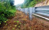 Phun hóa chất diệt cỏ để phát quang đường giao thông: Phê bình 2 tập thể, kỷ luật 2 cá nhân