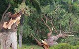 Hình ảnh bão số 2 độ bộ vào đất liền: Mưa lớn, gió giật, quật đổ nhiều cây xanh ở Hải Phòng