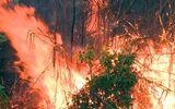 Hai vụ cháy rừng xảy ra liên tiếp cùng ngày tại Phú Yên, hàng trăm người nỗ lực dập lửa trong đêm