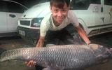 """Bắt được cá trắm đen """"khủng"""" dài 1,5 mét, nặng 50 kg ở Yên Bái"""