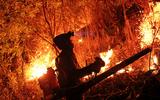"""Rừng ở Hà Tĩnh lại cháy đỏ rực, hàng trăm người xuyên đêm vật lộn với """"giặc lửa"""""""
