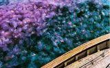 Khoảnh khắc tuyệt đẹp: Kì bí đàn sứa trăng bơi lội dày đặc trên mặt biển