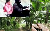 Hà Nội: Gã mổ lợn xâm hại bé gái 9 tuổi ở vườn chuối bị truy tố