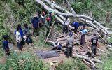Bình Định: Vào rừng chặt cây, nam thanh niên bị gỗ đè tử vong