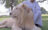 Video: Choáng ngợp với thú chơi xa xỉ của Hoàng tử Dubai
