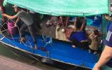 Vụ bé trai 4 tuổi rơi xuống biển mất tích ở Quảng Ninh: Đã tìm thấy thi thể nạn nhân