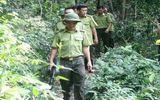Tin trong nước - Bắc Giang: Truy đuổi lâm tặc, cán bộ kiểm lâm bị chém trọng thương