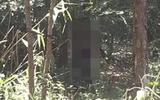 Pháp luật - Vào rừng hái măng, kinh hãi phát hiện thi thể đang phân hủy trong tư thế treo cổ