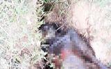 Hà Tĩnh: Tá hỏa phát hiện thi thể người đàn ông đang phân hủy dưới mương nước