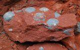 Chơi bên bờ sông, cậu bé 9 tuổi phát hiện trứng khủng long hóa thạch 66 triệu năm