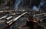 """Thổ dân tại Amazon chống chọi từng phút để bảo vệ """"lá phổi xanh"""" của Trái đất"""