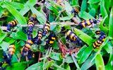 Tin trong nước - Vì sao thương lái Trung Quốc đặt mua bọ sọc giá 1-2 triệu/kg?