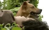 Video: Chú chó Phèn cứu Tư
