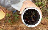 Đổ xô vào rừng bắt bọ lạ bán giá cao cho thương lái Trung Quốc