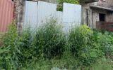 """Dự án """"nhà thứ trưởng"""" của Sông Đà 7 vẫn hoang lạnh, cỏ vượt đầu người"""