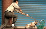 """Thanh Hóa: Chỉ trong 1 đêm, hơn 40 con chó bị """"cẩu tặc"""" bắt trộm"""