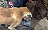 Video-Hot - Tình mẫu tử thiêng liêng: Chó mẹ hì hục bới đất cứu đàn con kẹt dưới ngôi nhà sập