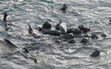 Video-Hot - Rớt nước mắt cảnh cá voi mẹ cọ vào cơ thể từng con non suốt đêm trước khi bị giết