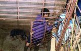 """Pháp luật - Đường dây trộm hơn 100 tấn chó ở Thanh Hóa: Đào cả hầm """"bí mật"""" dưới lòng đất để nhốt chó"""