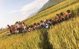 Tiết học kỳ lạ trên cánh đồng lúa chín khiến học sinh không muốn về nhà