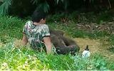 Video: Xúc động cảnh voi con mồ côi sà vào lòng cha nuôi khi bị đàn bỏ rơi
