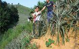 Lào Cai: Cháu trai hành hung, cướp tài sản của thím ruột