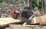 Phú Yên: Truy tìm nhóm lâm tặc phá rừng Hòn Đác
