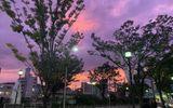 Cận cảnh bầu trời Nhật Bản đổi màu tím kỳ lạ trước khi siêu bão Hagibis đổ bộ