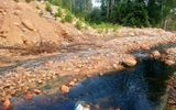 Nghệ An: Doanh nghiệp trồng rừng Lê Duy Nguyên tùy tiện xả thải gây ô nhiễm môi trường?