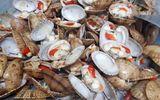 """Tung tin """"ăn sò lụa đỏ tử vong"""" ảnh hưởng đến ngư dân, cần xử lý nghiêm"""