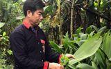 Việc tốt quanh ta - Người uy tín ở bản Dao Yên Sơn giúp bà con làm kinh tế, xóa bỏ tập tục lạc hậu