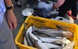 Tin trong nước - Kiên Giang: Hàng chục tấn cá lồng bè chết ồ ạt không rõ nguyên nhân