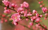 Bộ Lao động chính thức thông báo lịch nghỉ Tết Âm lịch 2020