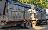 Trốn công an khi đổ trộm hơn 20 tấn rác thải, tài xế bị rắn độc cắn