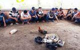 Bắt quả tang hàng chục đối tượng đá gà ăn tiền phía sau căn biệt thự ở Vĩnh Long