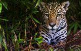 NASA: Rừng Amazon đang ngày càng khô cằn, hiểm họa cháy rừng tăng cao