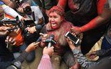 Nữ thị trưởng Bolivia bị dội sơn đỏ, cắt tóc và ép ký vào đơn từ chức