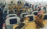 Kinh doanh - Ngỡ ngàng trước sự chịu chơi của giới siêu giàu: Mua 80 vé máy bay cho chim ưng
