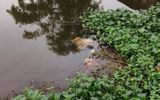 Tin trong nước - Kinh hoàng phát hiện thi thể người đàn ông trên kênh nước