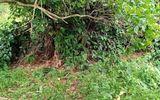 Vụ phát hiện thi thể không nguyên vẹn trong vườn điều: Tim thấy phần đầu của nạn nhân